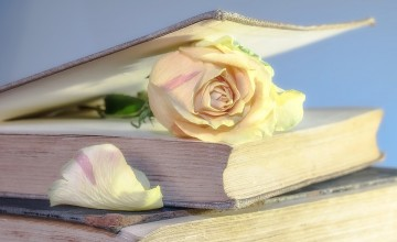 rose-2101475_960_720